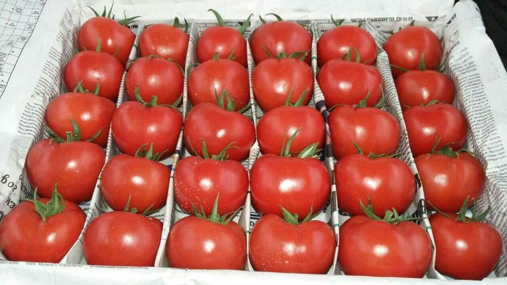Купить Свежие помидоры