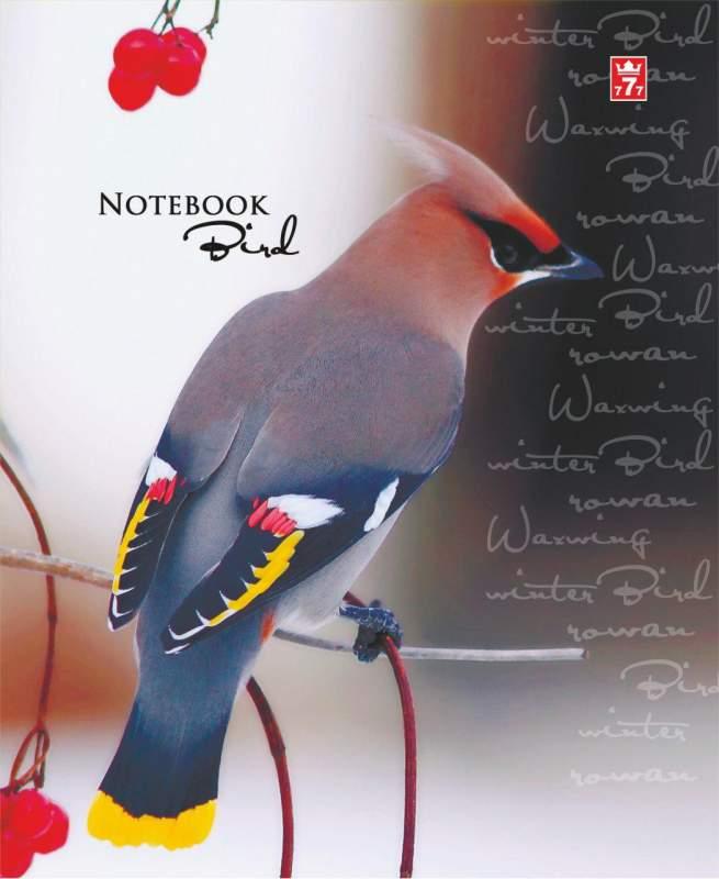 Купить Общая тетрадь 48 листов