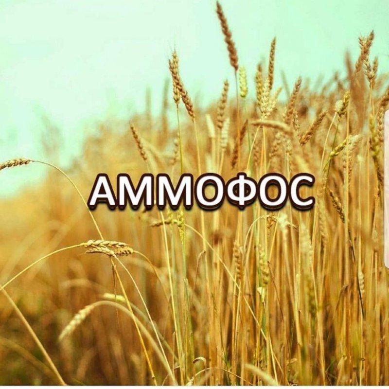 Купить Аммофос производства Казфосфат всего 4000 сум кг
