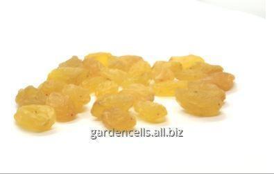 Купить Изюм - голден Raisins - Golden
