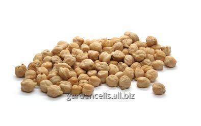 Купить Горох - Нут(N6) Chickpeas(N6)