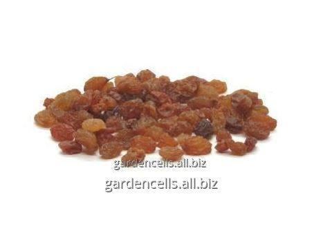 Купить Изюм Султана абджуш Raisins Sultan - Abjush Khorezm Garden Cells