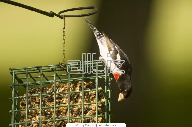 Купить Оборудование для птицеводства Клетки для перепелов