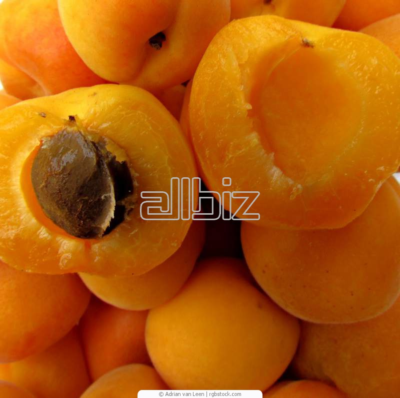 Agriculture. Fruit and vegetable cultures. Fruit. Apricots.