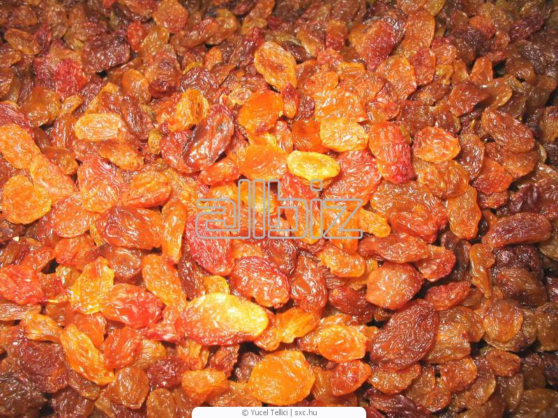 Agriculture. Fruit and vegetable cultures. Fruit dried. Raisin.