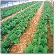 Пестициды Astrachem