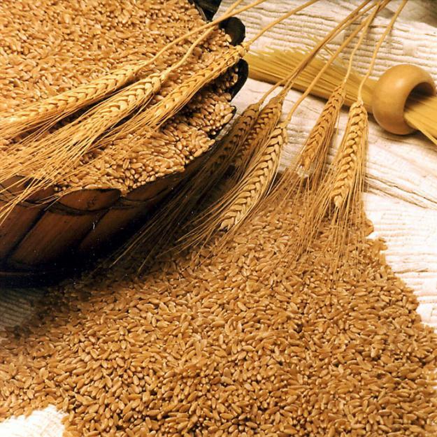Пшеница 3-класса экспорт из Узбекистана