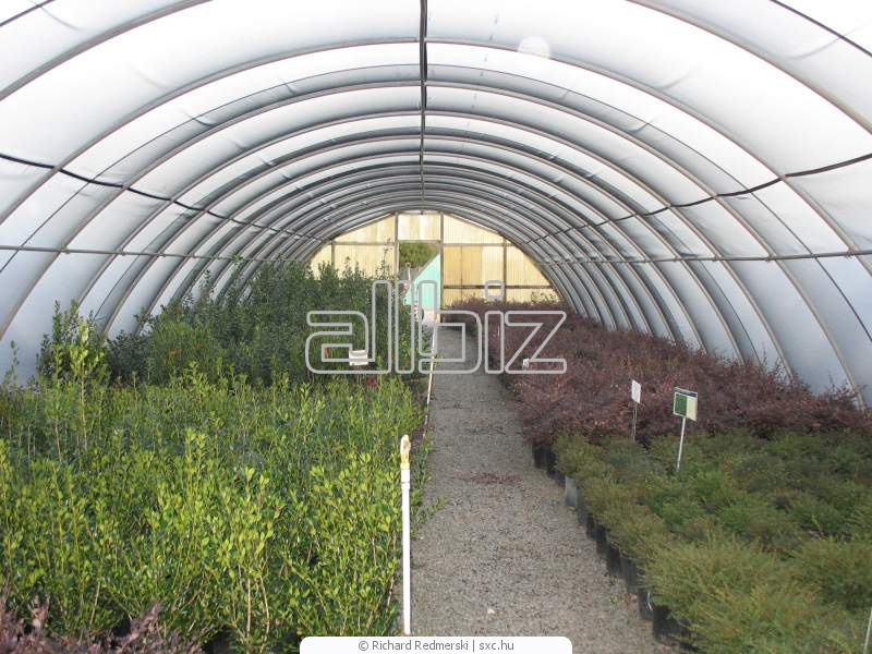 Buy Greenhouses