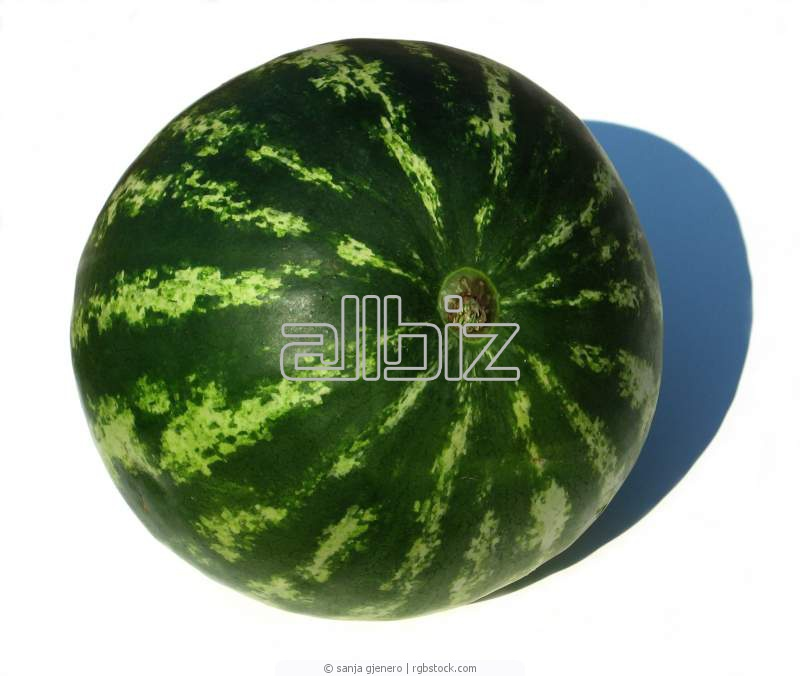 Buy Water-melon and melon