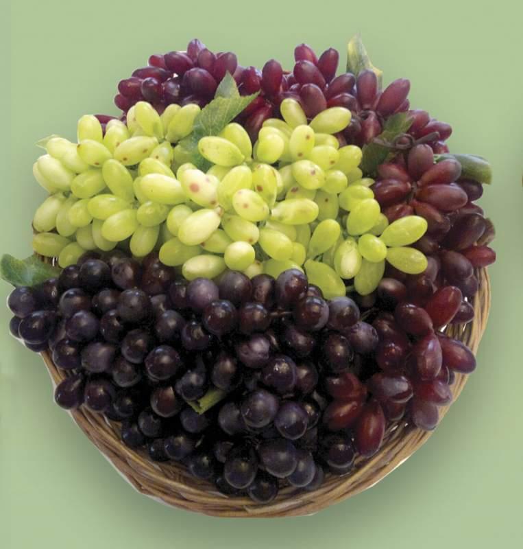 Купить Виноград декоративный