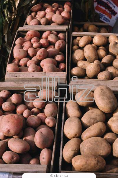 Buy Potatoes without GMO