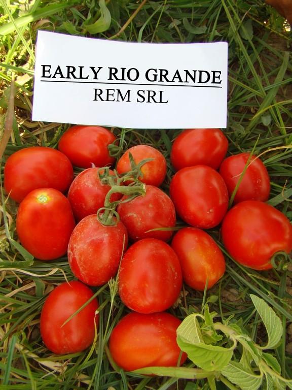 Купить Семена томата Rio Grande F1