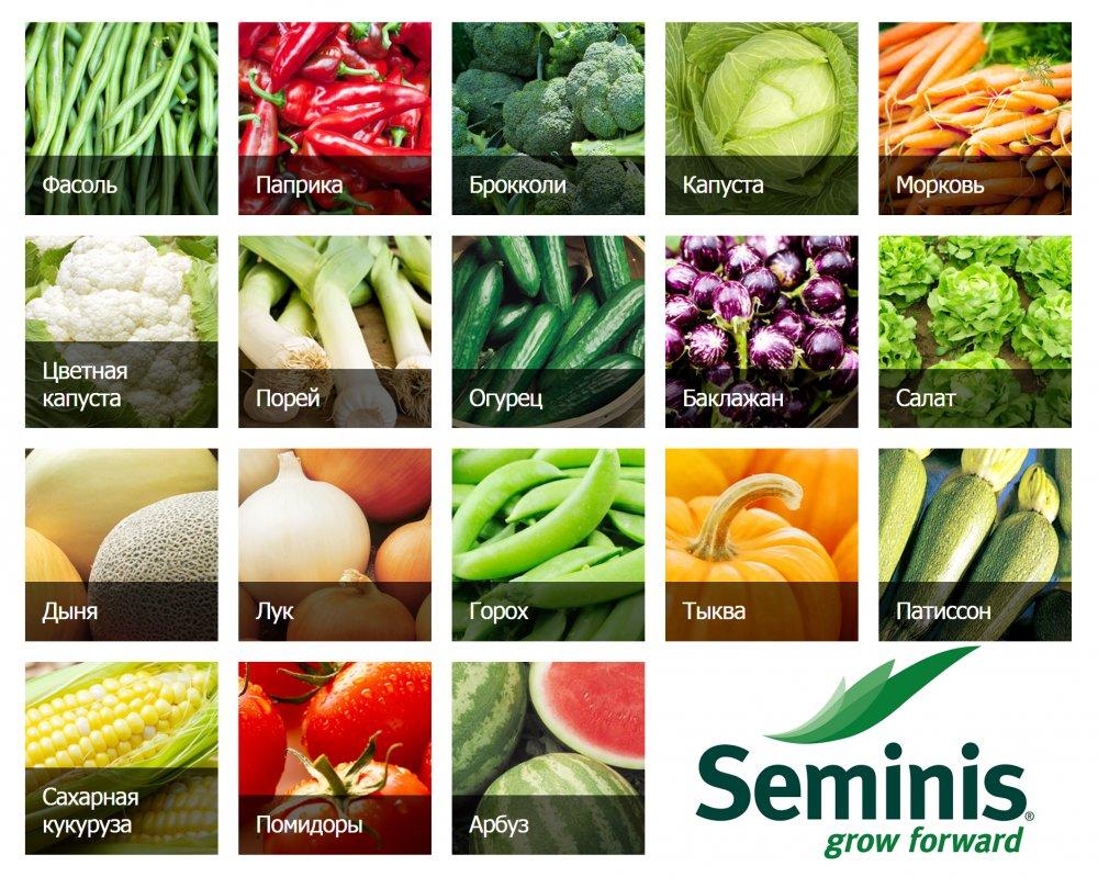 Купить Семена овощей в Узбекистане от SEMINIS из первых рук!