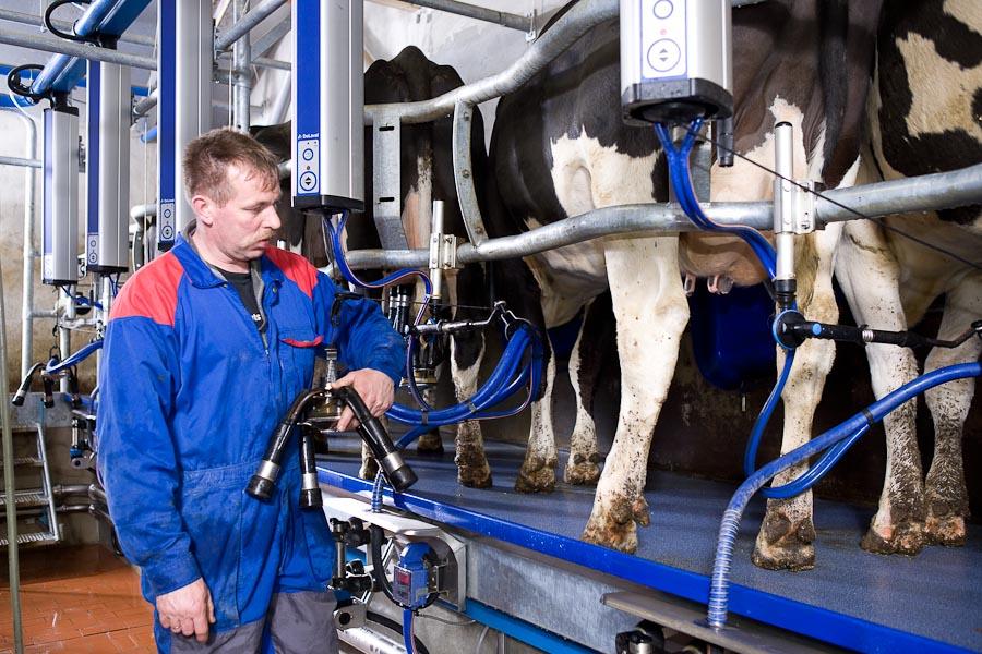Buy Milking Fir-tree hall Delaval HB30