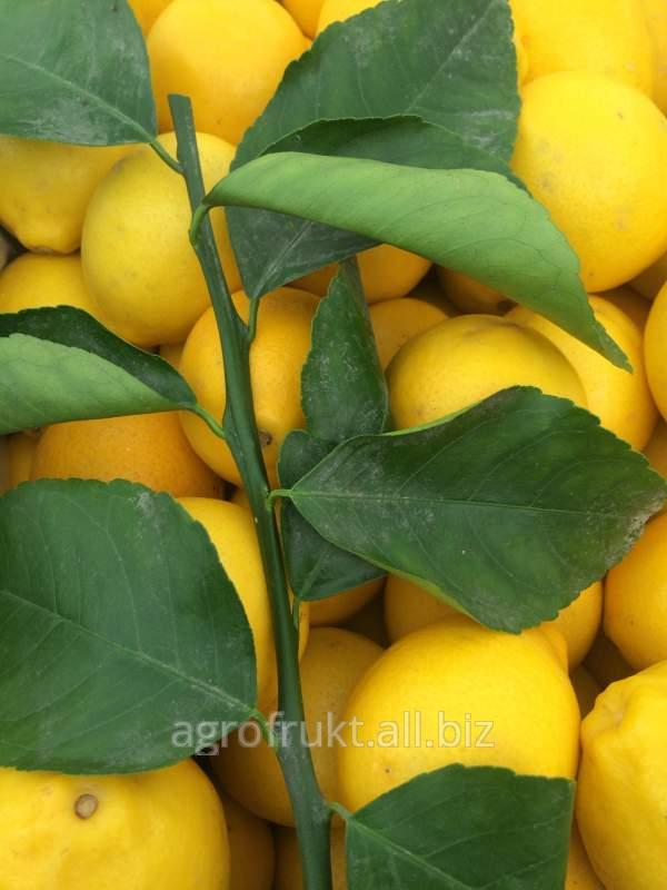 Купить Лимоны свежие