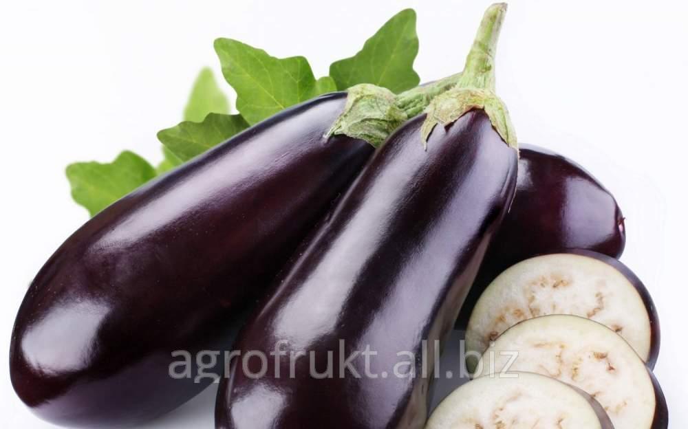 Buy Eggplants