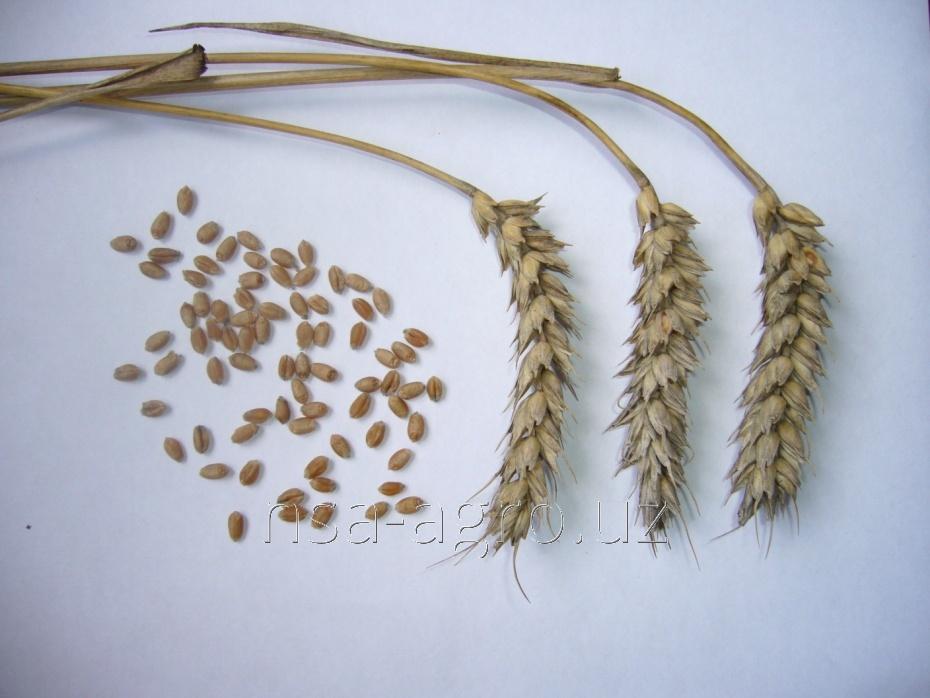 Удобрение для озимой пшеницы Атланте, 1,0 л/га + Келик Микс