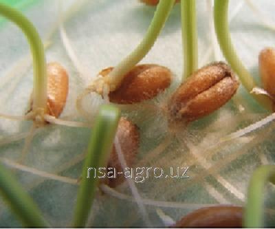 Удобрение для озимой пшеницы Келик К,1,0 л/га + Флорон