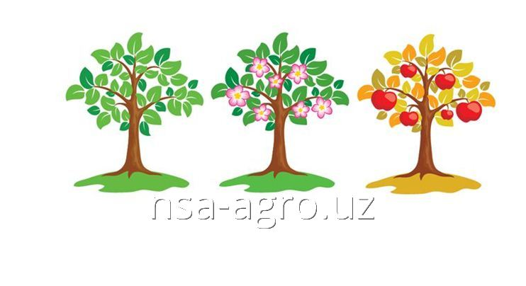 Листовая подкормка яблонь Келкат Микс Кальций, 0,5 кг/га + Аминокат 10-%, 0,5 л/га