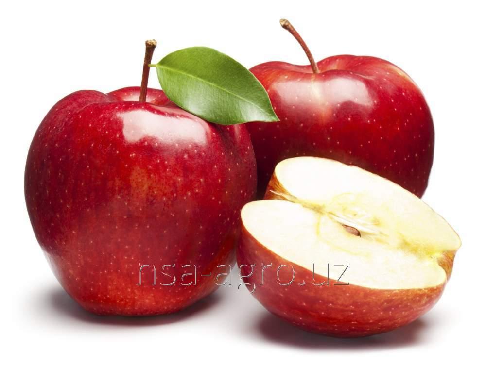 Листовая подкормка яблонь Келик К, 1,0 л/га + Флорон, 0,5 л/га