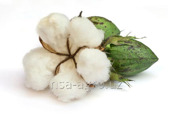 Удобрения для хлопчатника Райкат Старт,1,0 л/т семян