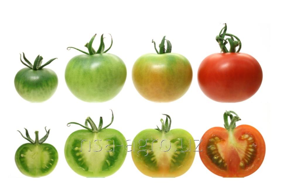 Корневая обработка помидор NPK 20-20-20 кг