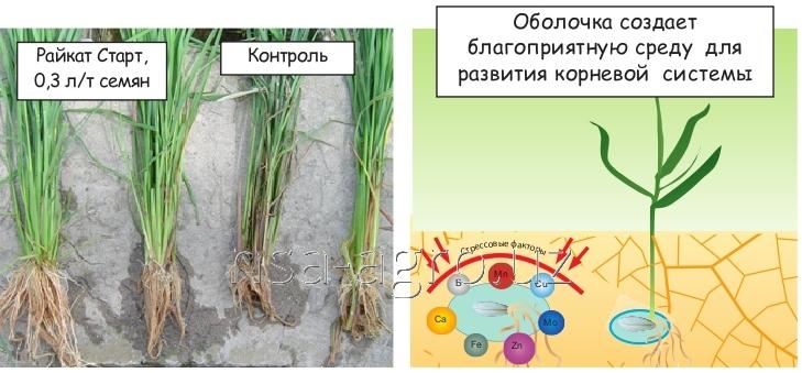 Минеральное удобрение для риса Атланте