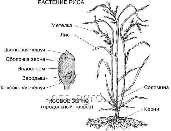 Минеральное удобрение для риса Келик К