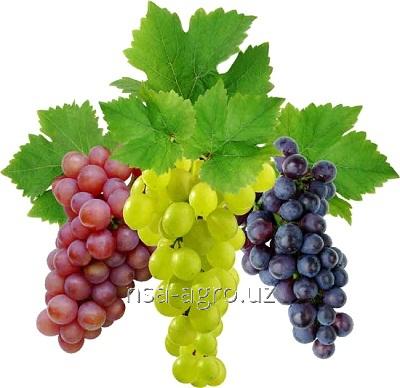 Минеральное удобрение для винограда Аминокат 10 %