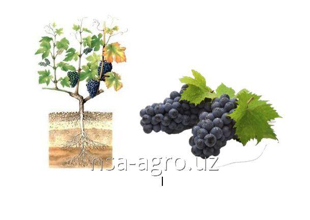 Минеральное удобрение для винограда Келик К+Si