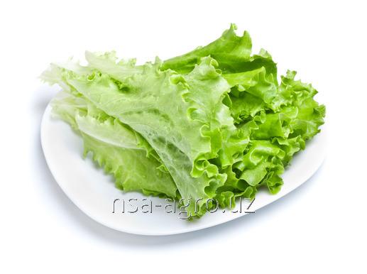 Корневая подкормка листьев салата Raykat Start