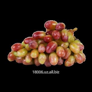 Купить Ризамат виноград Сезон сбора: август-ноябрь