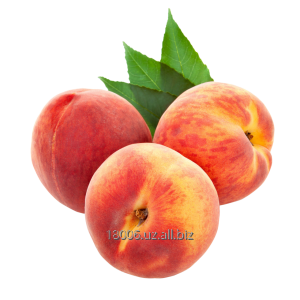 Buy Peach Season of collecting: June-October