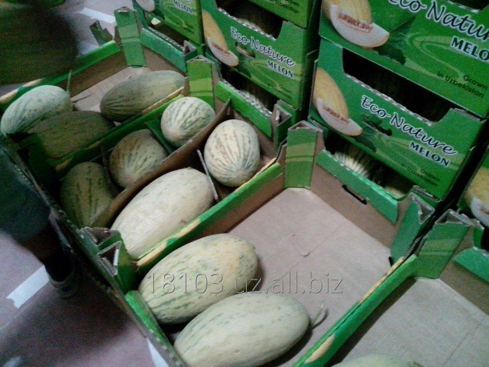 Купить Melon