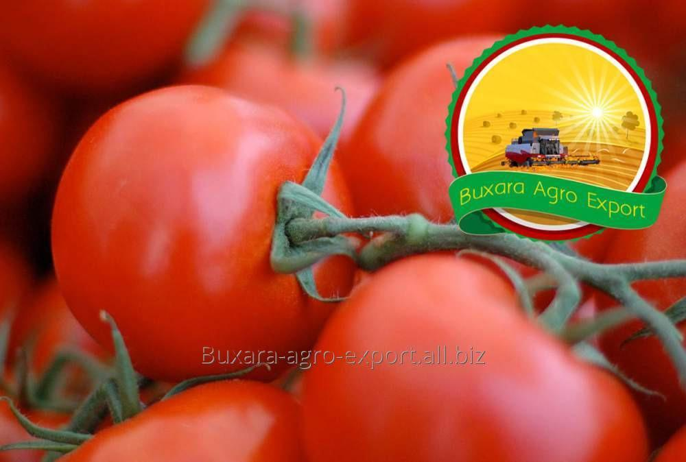 Купить Помидоры Султан Bukhara Agro Export