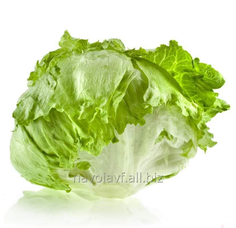 Купить Айсберг салат