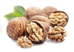 Орехи на экспорт