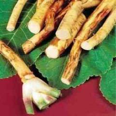 The horseradish root is dried