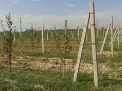 Шпалеры для садоводство
