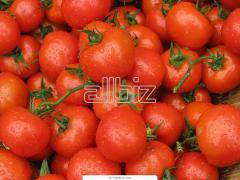 Томаты консервированные, помидоры