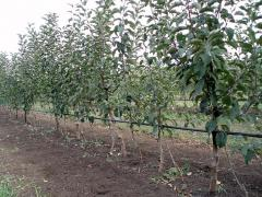 Kapelnyj poliv, drip irrigation systems