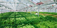 """The automated greenhouses"""" from the"""