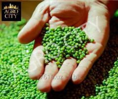 Mash green (beans mung)