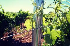 Шпалеры для виноградников из Испании