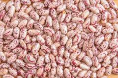 얼룩 덜 룩 한 다양 한 콩