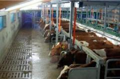 PARALLEL milking parlors