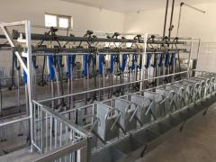 Milking systems for goats