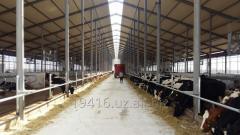 Животноводческий молочно-товарный комплексы