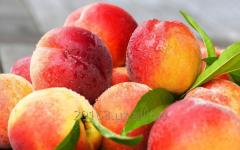 """Персики сорта """"Нектарин"""""""