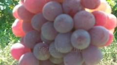 Виноград свежий Ризамат